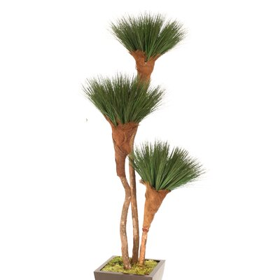 Pom Pom Grass Tree in Planter T611-7-M11A