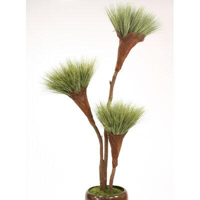 Basil Grass Pom Pom Tree in Planter T614-7-M9B