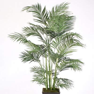 Areca Palm Tree in Planter T504-7-A35S