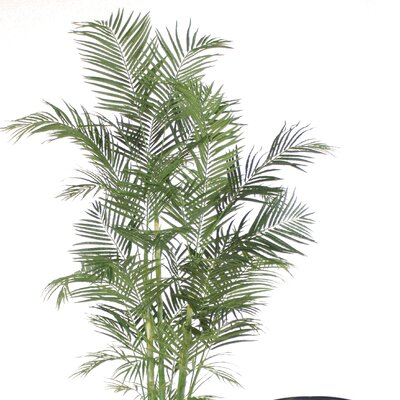 Areca Floor Palm Tree in Planter T504-8-A35S