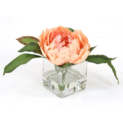 Waterlook Peach Peony in Square Glass Floral Arrangements (Set of 3)