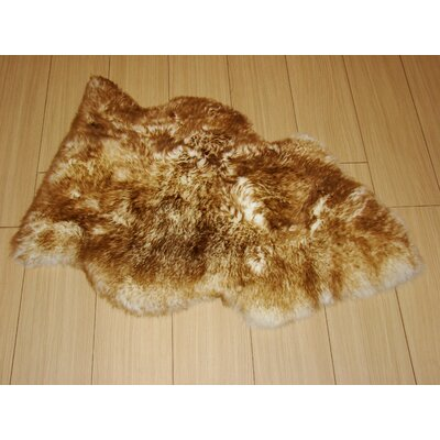 Pet Eclipse Rug Rug Size: 2 x 3
