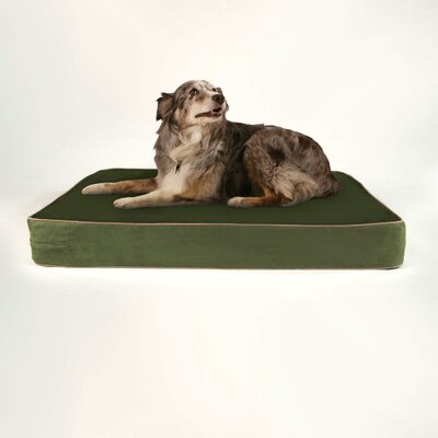 Pandora Gel Memory Foam Dog Bed with Microfiber Cover Color: Forest Fern Green