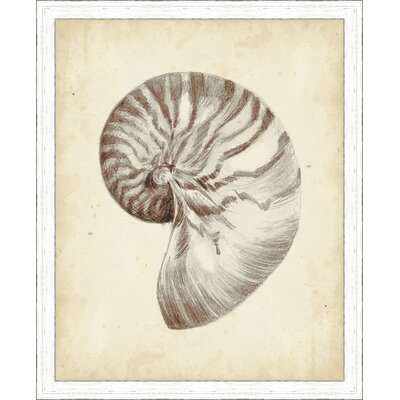 'Coastal Antique Shell Study I' Framed Painting Print 3066