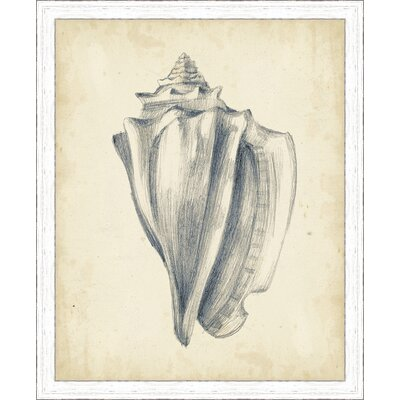 'Coastal Antique Shell Study IV' Framed Painting Print 3068