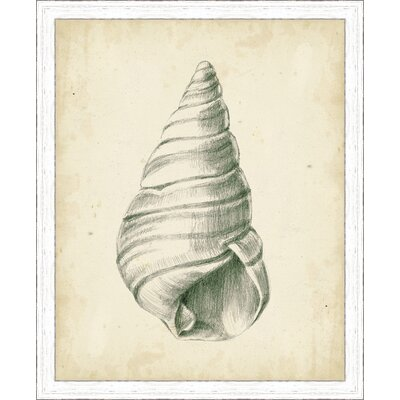 'Coastal Antique Shell Study V' Framed Painting Print 3069