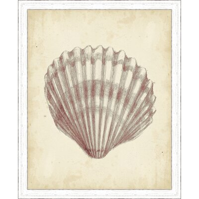 'Coastal Antique Shell Study III' Framed Painting Print 3067