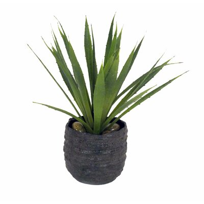 Agave Desk Top Plant In Pot