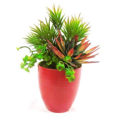 Faux Succulent/senecio/agave/sedum Plant In Pot