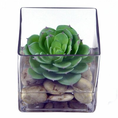 Faux Echeveria in Glass Cube