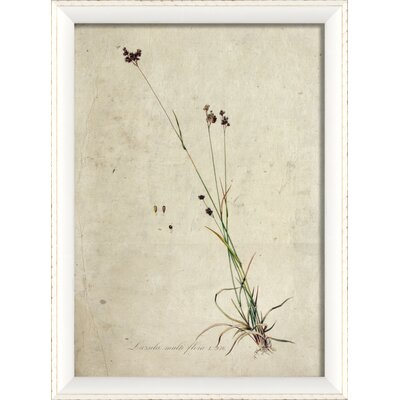 Botanical Framed Graphic Art Print Frame Color: White
