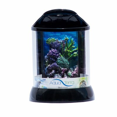 Aqua Terrarium Color: Black, Size: 1 Gallon
