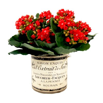 Kalanchoes in French Glass Color: Red