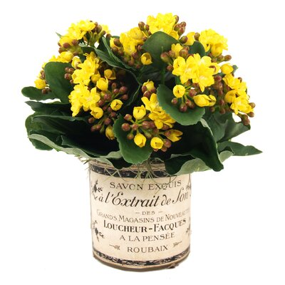 Kalanchoes in French Glass Color: Yellow