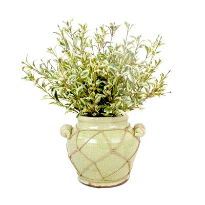 Oregano Distressed Glaze Planter with Jute Trim