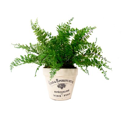 Spring Additions Curly Fern Desk Top Plant In Planter