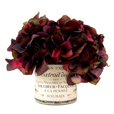 Spring Additions Burgundy Hydrangea In French Label Pot