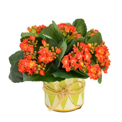Faux Orange Kalanchoe