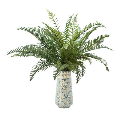River Fern in Decorative Pot