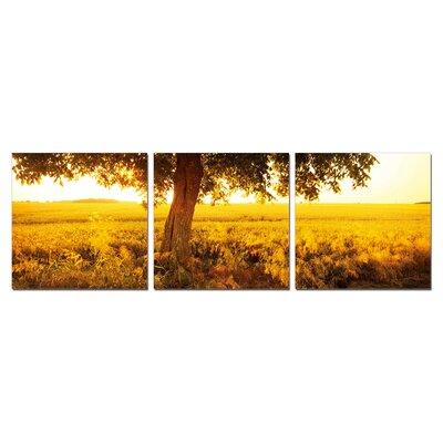 "Prairie 3 Piece Framed Photographic Print Set Size: 24"" H X 24"" W X 1"" D"