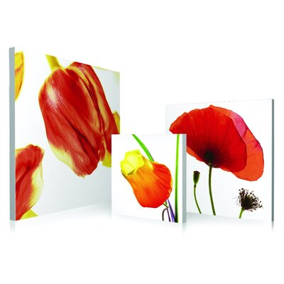 Poppy Flowers 3 Piece Framed Photographic Print Set