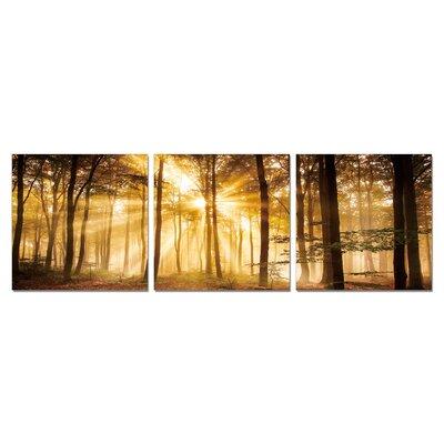 'Golden Mystic Forest' 3 Piece Framed Photographic Print Set SH-71431