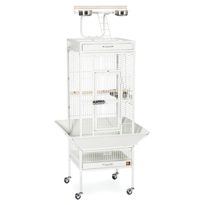 Signature Series Select Small Bird Cage Color: Chalk White