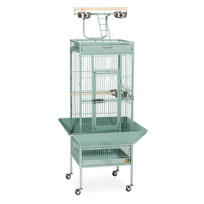 Signature Series Small Bird Cage Color: Sage Green