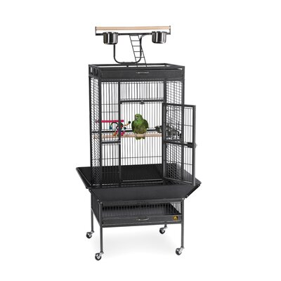Signature Series Medium Bird Cage Color: Black