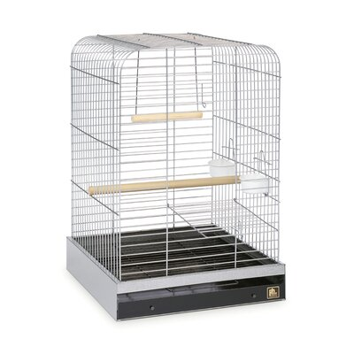 Parrot  Bird Cage Color: Nickel