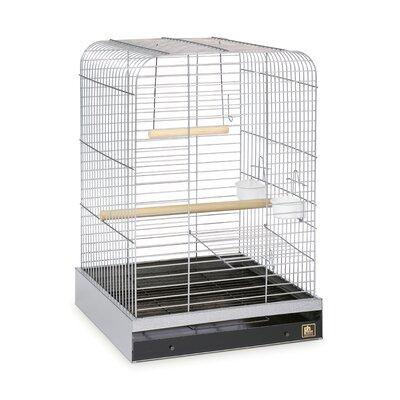 Parrot  Bird Cage Color: Nickel
