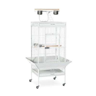 Signature Series Medium Bird Cage Color: Chalk White