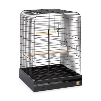 Parrot  Bird Cage Color: Black