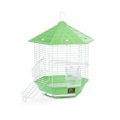 Bali Bird Cage Color: Green