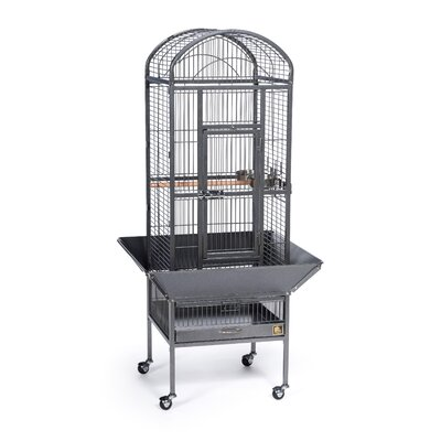 Small Dometop Bird Cage Color: Black Hammertone