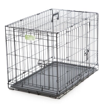 iCrate Double Door Pet Crate Size: Medium (21 H x 19 W x 30L)
