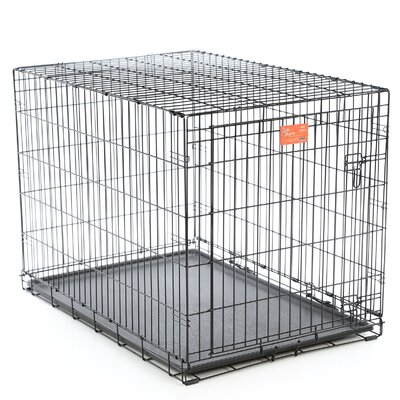 Life Stages Fold & Carry Single Door Pet Crate Size: Large (31 H x 28 W x 42 L)