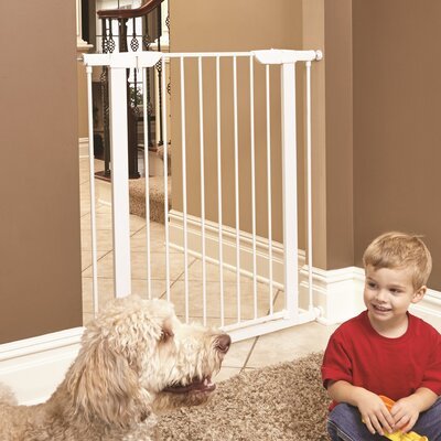 Freddy Steel Pressure Mounted Pet Gate Size: 39 H x 38 W x 1 D, Finish: White