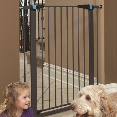 Expands Glow Stripe Pet Gate Size: 39 H x 29 W x 1.13 D, Finish: Graphite