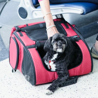 Pet Carrier Size: 19 H x 16.5 W x 10.5 D, Color: Red