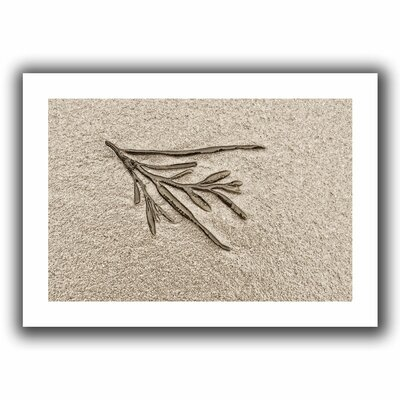 'Beach Find III' by Cora Niele Graphic Art on Canvas Size: 16