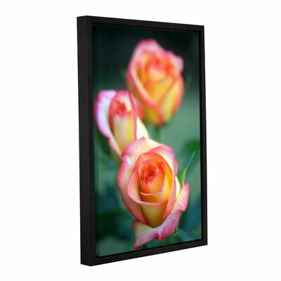 Rose Trio by Kathy Yates Floater Framed Photographic Print on Gallery Wrapped Canvas Size: 16