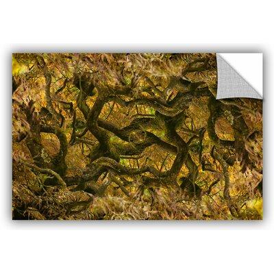 'Acer Palmatum Dissectum Ornatum' by Cora Niele Photographic Print Size: 12