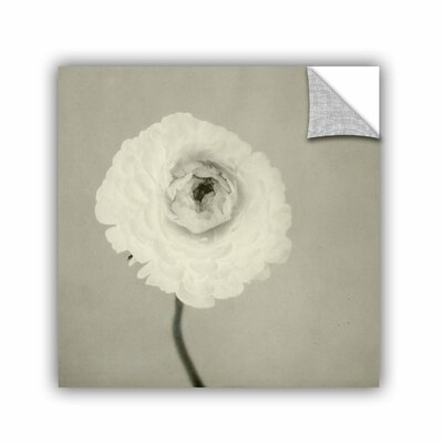 Ranunculus by Elena Ray Graphic Art 0ray085a1414p