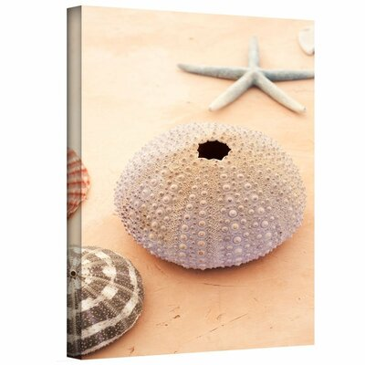 Seashells by Elena Ray Photographic Print on Wrapped Canvas 0ray088a1218w