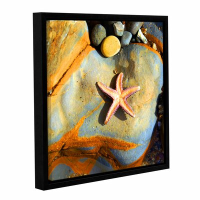 Asteroidea by Irena Orlov Floater Framed Photographic Print Size: 36