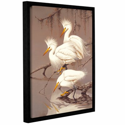 Robertson Great White Herons Framed Photographic Print on Canvas