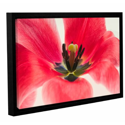 'Red Tulip' by Cora Niele Framed Graphic Art Size: 12