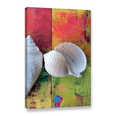 'Seashells on Pink I' by Elena Ray Photographic Print on Wrapped Canvas 0ray196a0812w