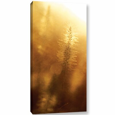 'Golden Treasure'  Photographic Print On Wrapped Canvas Size: 12